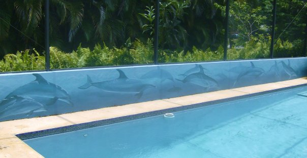 pool dolphins