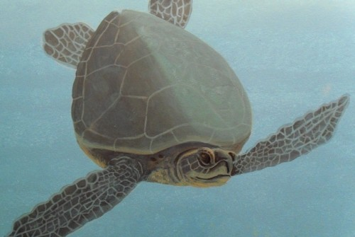 Sea Turtle Detail