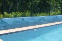 Dolphins by the Pool